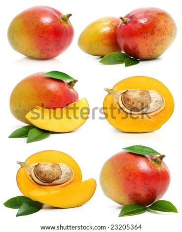 set of fresh mango fruits isolated on white background