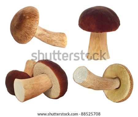 set of fresh mushrooms