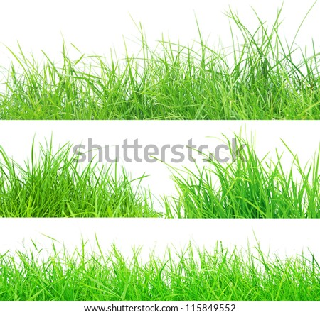 set of fresh spring green grass panorama isolated on white background.