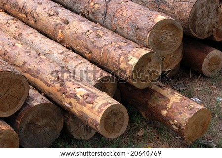 set of fresh whole timbers, concept of deforestation