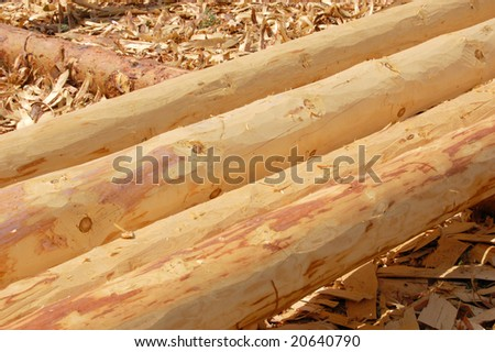set of fresh whole timbers, concept of deforestation - stock photo