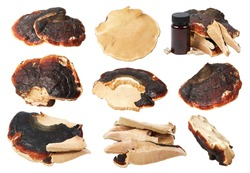 Set of Ganoderma Lucidum mushroom (also called as Reishi mushroom or Lingzhi mushroom) isolated on a white background with clipping path