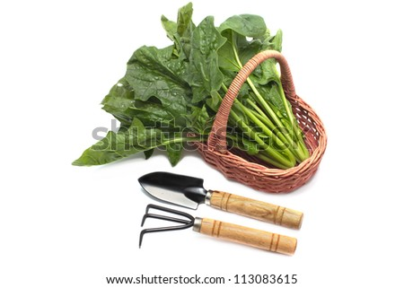Set of gardening tools and fresh spinach in basket on  white background - stock photo