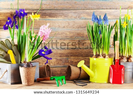 Set of gardening tools and seedling of spring flowers for planting on flowerbed in the garden. Horticulture concept. #1315649234