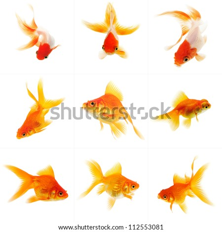 Set of Goldfish on White Background Without Shade