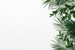 Set of green leaves frame on white background, natural frame, copy space for ad