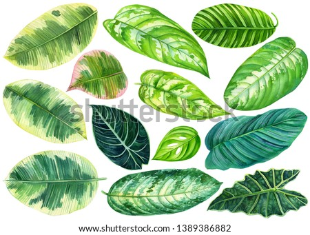 set of green leaves, tropical plants on an isolated white background, watercolor illustration, painting jungle