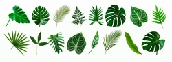 set of green monstera palm and tropical plant leaf isolated on white background for design elements, Flat lay