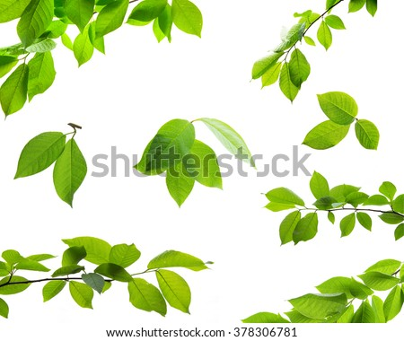 Set of green tree leaves and branches with raindrops isolated on white background