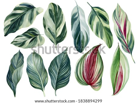 Set of green tropical leaves on white background, watercolor illustration, jungle design