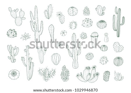 Set of hand drawn different cactuses in sketchy doodle style.