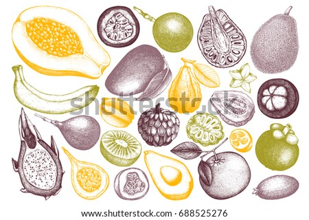 Set of hand drawn tropical fruits illustration. Vintage set of leaves, fruits, flowers sketch white background. Exotic garden drawing.
