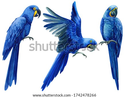 Set of hand-drawn watercolor birds, macaw hyacinth parrot on an isolated transparent background, tropical illustration Foto stock ©