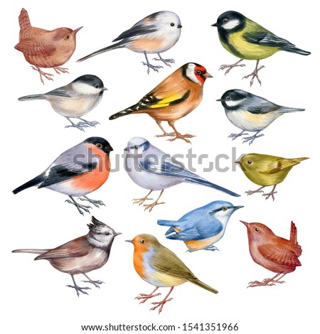 Set of handpaintig watercolor forest birds isolated on white. Close-up small birds on white background. For posters, textile design, postcard and ornithology magazine. stock photo