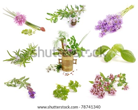set of herbs on white
