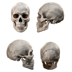 Set of human skull in different angles. Isolated on white background. Side and front views collage set. Anatomy and medicine concept.