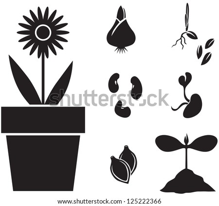 Set of images of plants for planting: flower, seeds, sprouts - stock photo