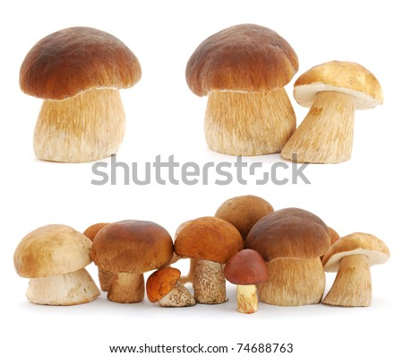 Set of images with mushrooms on white background