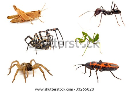 Set of insect isolated on white background