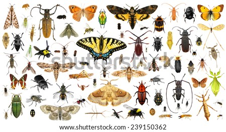 Photo of  Set of insects on a white background