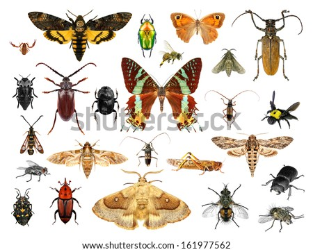 Set of insects on white background #161977562