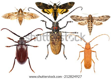 Set of insects on white background  #212824927