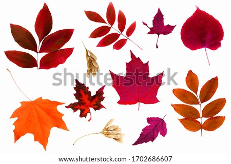 Set of isolated autumn leaves.