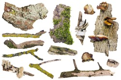 Set of isolated elements of the old forest  wood macro- bark, mushrooms,  moss,  lichen and  sticks