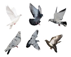 set of isolated on white six doves