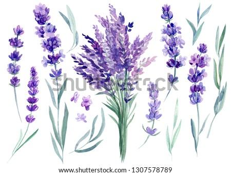 set of lavender flowers, bouquet of lavender flowers on an isolated white background, watercolor illustration, hand drawing Сток-фото ©