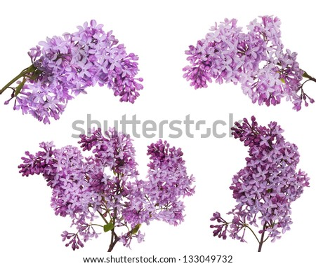 set of light lilac flowers isolated on white background #133049732