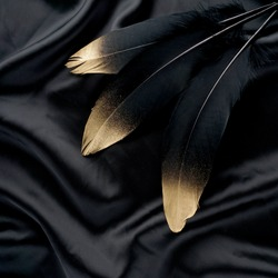 set of luxury gilded gold golden black swan feather on silk cloth background