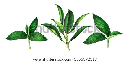 Set of magnolia & orchid leaves isolated on white background. Hand drawn watercolor illustration.