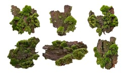 Set of Moss or Mosses on a pine bark, Green moss on a tree bark isolated on white background, with clipping path