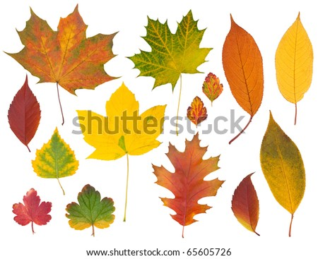 Set of multi-colored autumn leaves