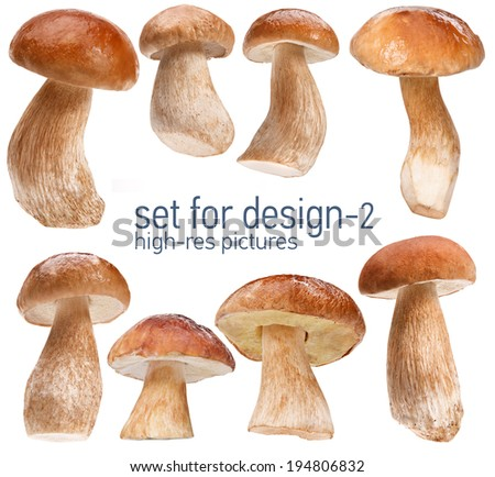 Set of mushrooms - gustable edulis isolated on white background with set for design  Foto stock ©