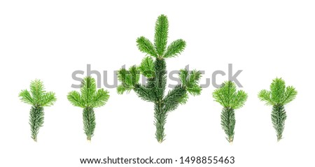Set of natural green spruce twig isolated on white background. Lush fir branches or pine twigs sprig collection top view #1498855463