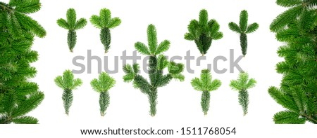 Set of natural green spruce twig isolated on white background. Lush fir branches or pine twigs sprig collection top view #1511768054