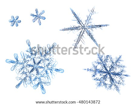 set of natural snowflakes on a white background #480143872