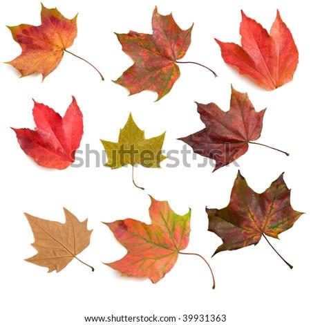 Set of nine isolated autumn leaves