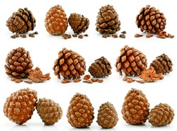Set of Nuts and Cones of Siberian Pine Isolated on White Background