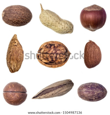 Set of nuts close up isolated on white: macadamia,  peanut, arachis, earth-nut, hazel-nut, filbert, hazelnut, walnut, pecan, Brazil nut