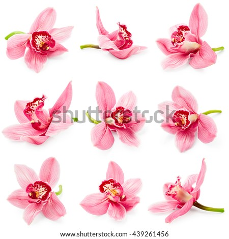 Set of orchid flower isolated on white background #439261456