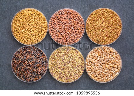 set of organic sprouting seeds in Petri dishes, counterwise from top left - fenugreek, radish, alfalfa, red clover and hard wheat #1059895556