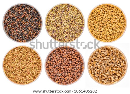 set of organic sprouting seeds in Petri dishes isolated on white, clockwise from top left - broccoli, red clover, fenugreek, wheat, raddish, alfalfa. #1061405282