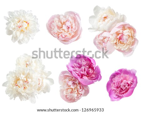 Set of peonies flower isolated on white background #126965933