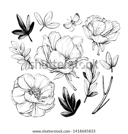 Set of peonies with leaves. Floral elements for design. Hand drawing with ink and pen. #1418685833