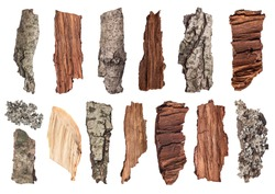 set of pieces of wood, bark and moss on an isolated background