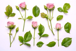 Set of pink flowers. Decorative pattern with pink bright roses on white background. View from above, flat lay, top view
