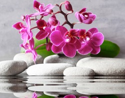 Set of pink orchid and gray spa stones on water and reflection
